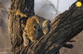 تصاویری زیبا از حیوانات